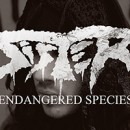 SISTER releases brand new video for 'Endangered Species' via Metal Hammer Germany!